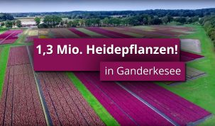 Vorschaubild-Millionen-Heidepflanzen-aus-Ganderkesee-Imagefilm